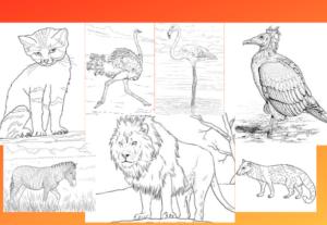 11981كتاب تلوين الحيوانات للأطفال kdp