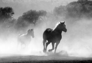 14753Convert black and white images to color
